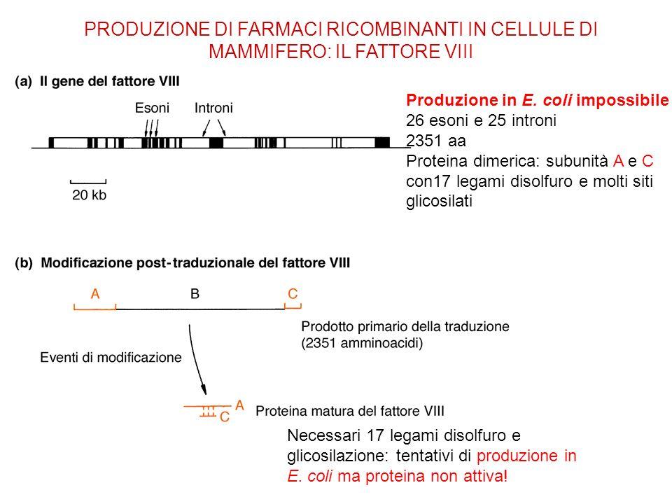 PRODUZIONE DI FARMACI RICOMBINANTI IN CELLULE DI MAMMIFERO: IL FATTORE VIII