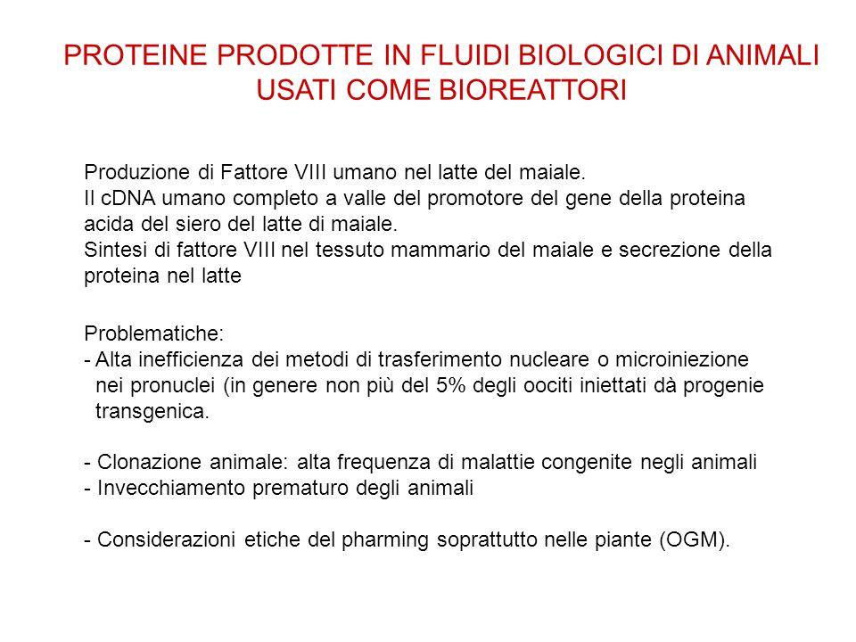 PROTEINE PRODOTTE IN FLUIDI BIOLOGICI DI ANIMALI USATI COME BIOREATTORI