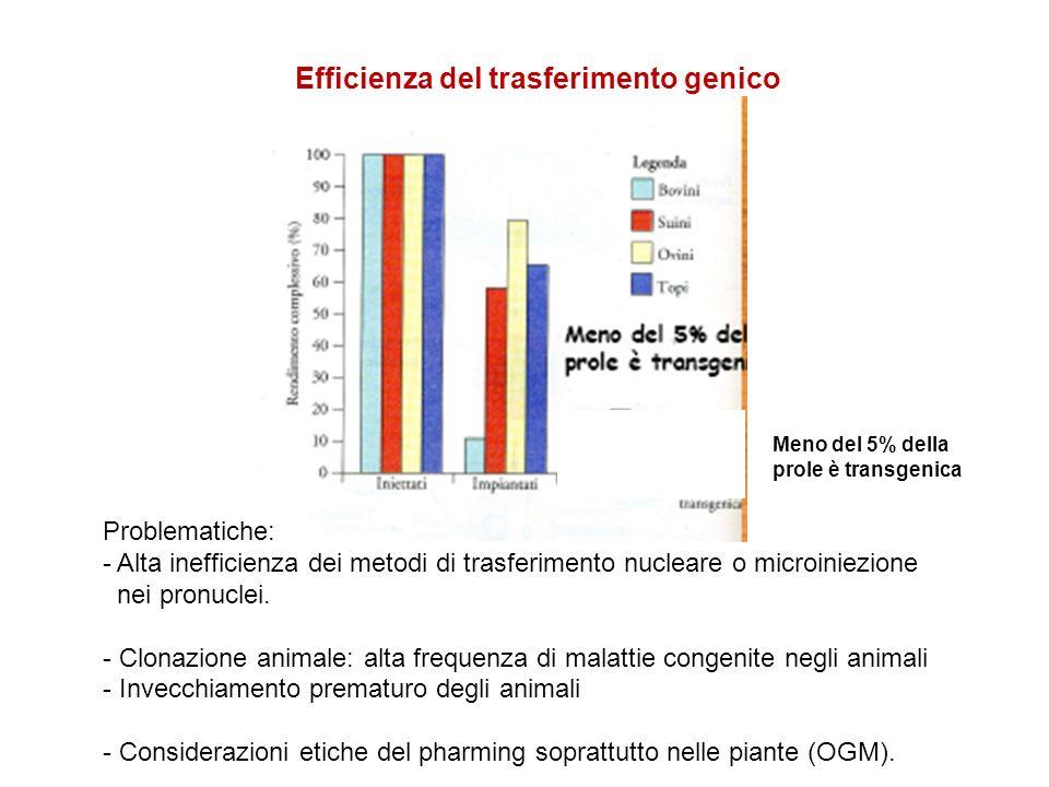 Efficienza del trasferimento genico