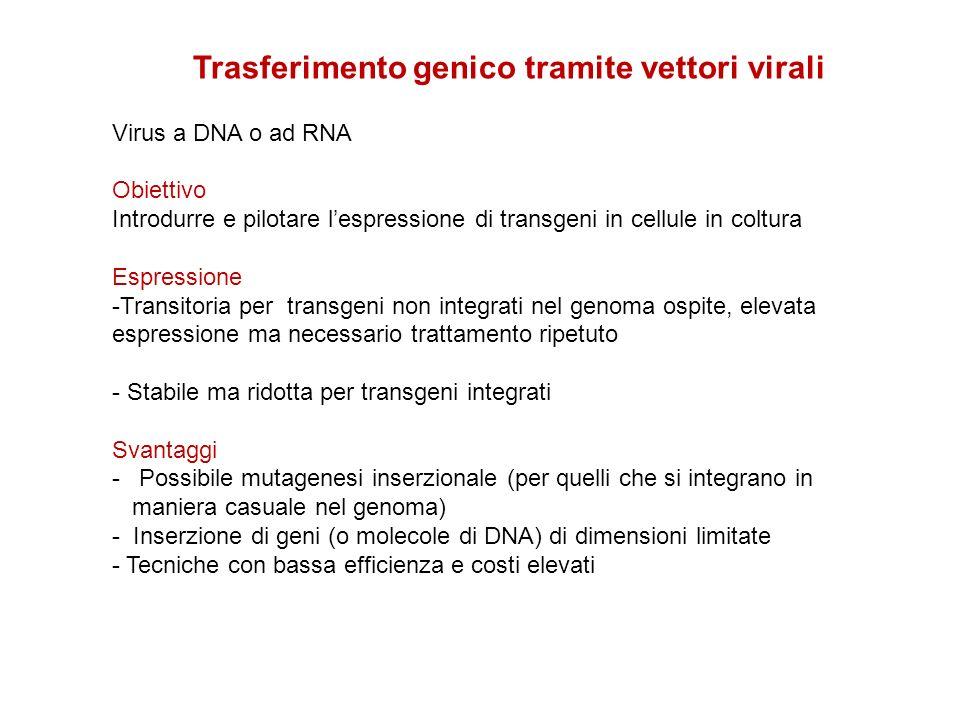 Trasferimento genico tramite vettori virali