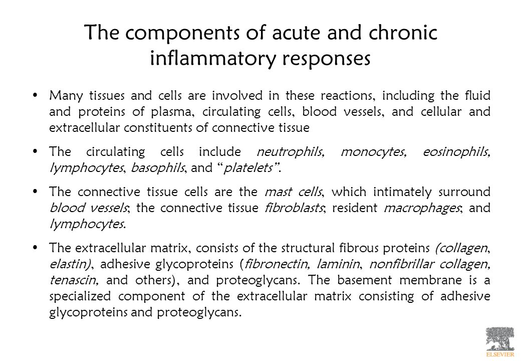 The components of acute and chronic inflammatory responses