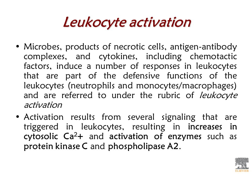 Leukocyte activation