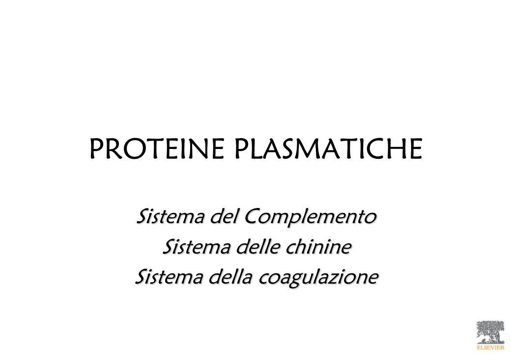 PROTEINE PLASMATICHE Sistema del Complemento Sistema delle chinine