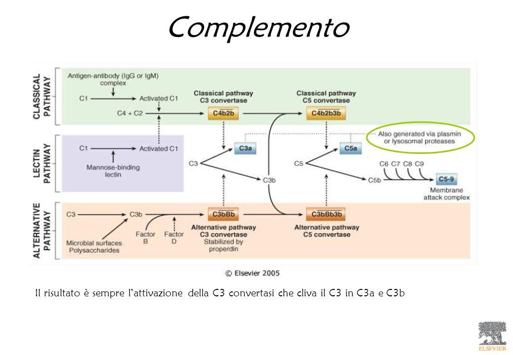 Complemento Il risultato è sempre l'attivazione della C3 convertasi che cliva il C3 in C3a e C3b
