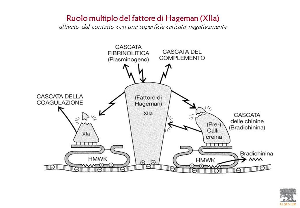 Ruolo multiplo del fattore di Hageman (XIIa)