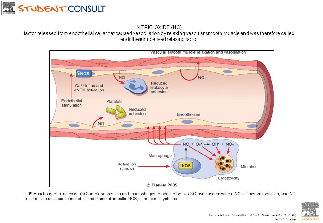 NITRIC OXIDE (NO) factor released from endothelial cells that caused vasodilation by relaxing vascular smooth muscle and was therefore called endothelium-derived relaxing factor