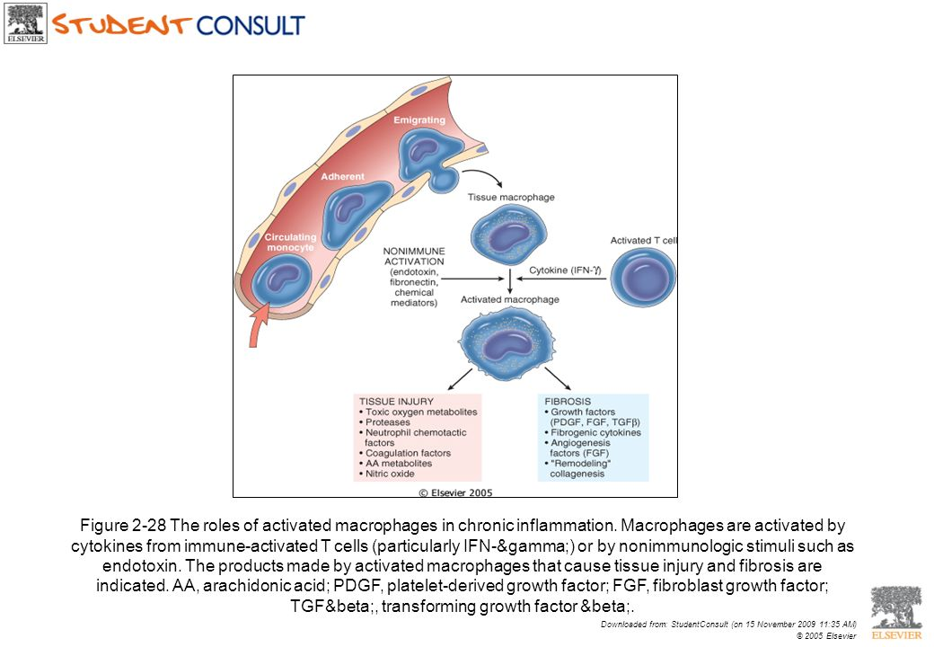 Figure 2-28 The roles of activated macrophages in chronic inflammation