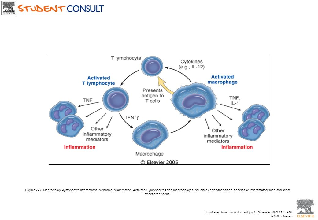 Figure 2-31 Macrophage-lymphocyte interactions in chronic inflammation