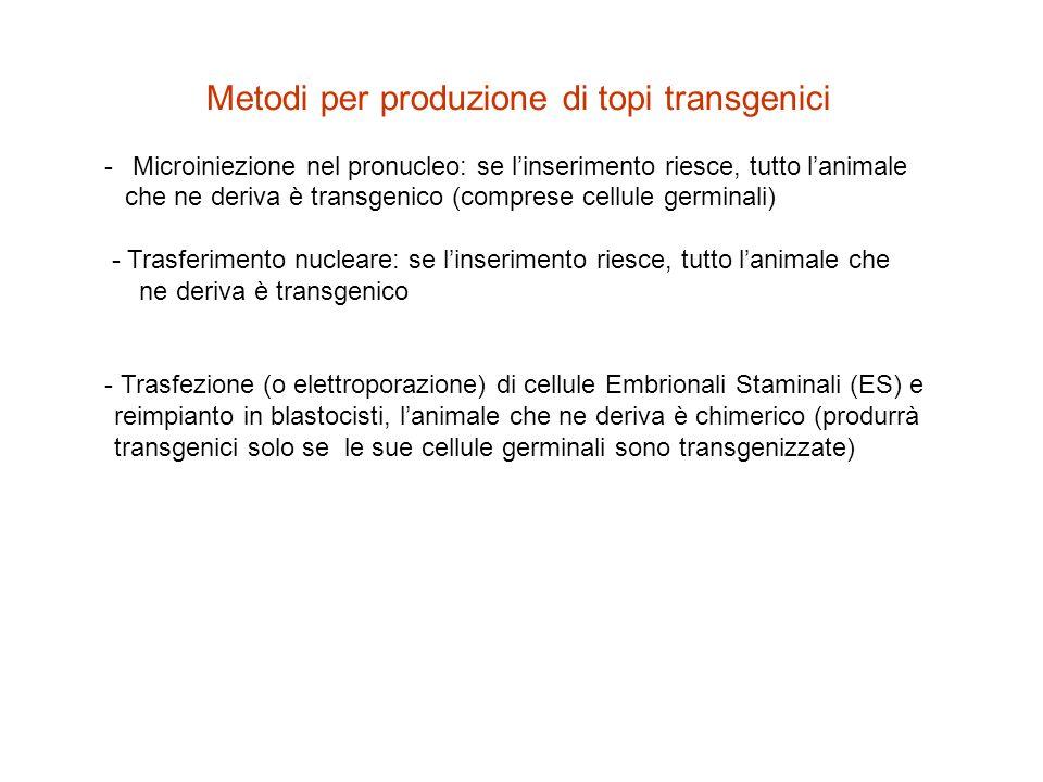 Metodi per produzione di topi transgenici