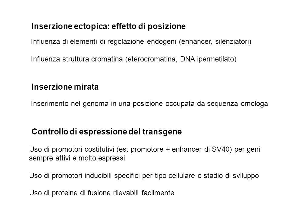 Inserzione ectopica: effetto di posizione