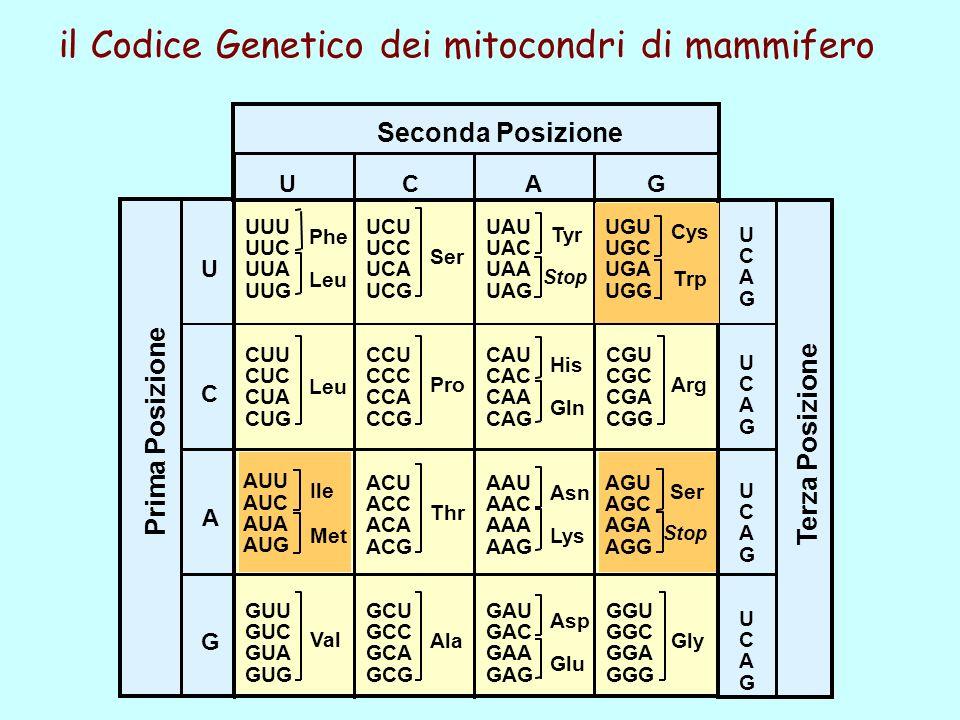 il Codice Genetico dei mitocondri di mammifero