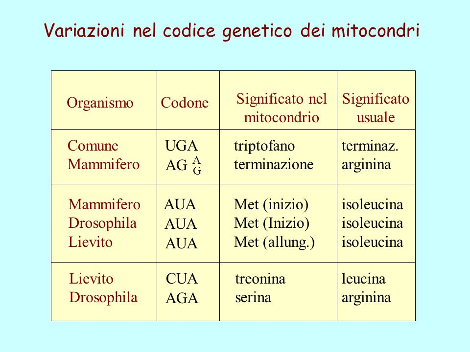 Variazioni nel codice genetico dei mitocondri
