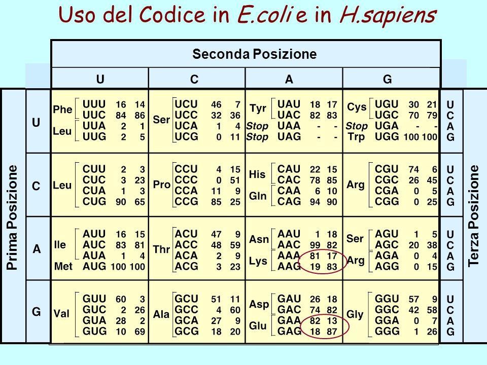 Uso del Codice in E.coli e in H.sapiens