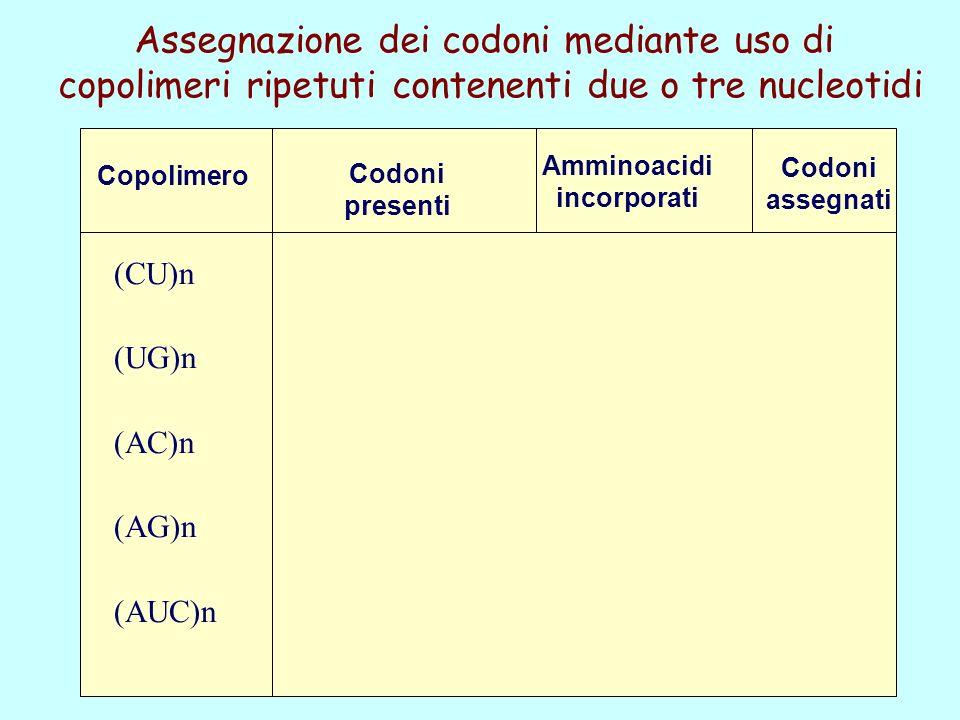 Assegnazione dei codoni mediante uso di