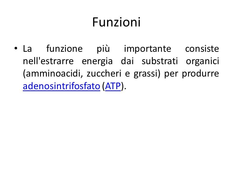 Funzioni