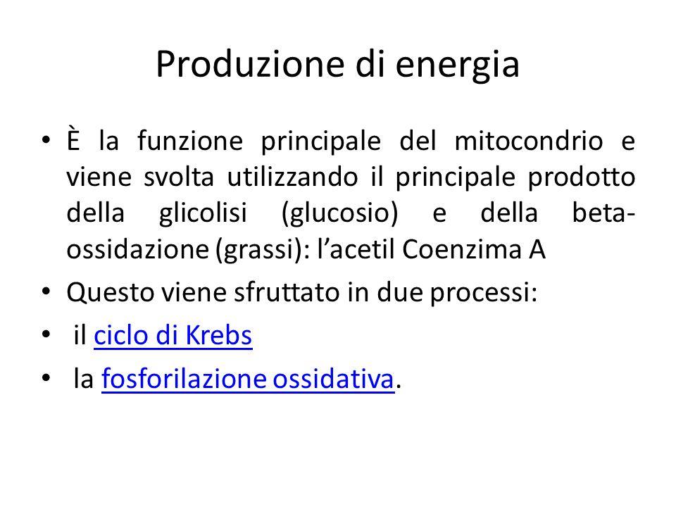 Produzione di energia
