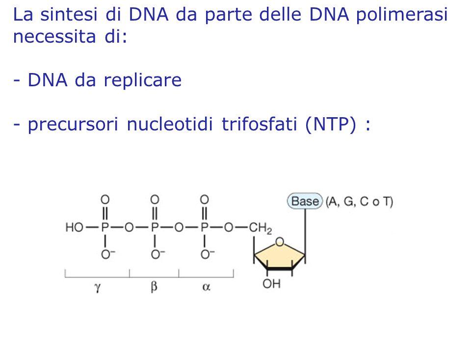 La sintesi di DNA da parte delle DNA polimerasi necessita di: