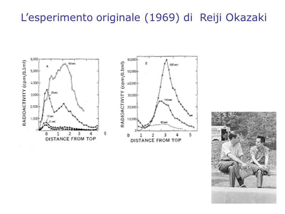 L'esperimento originale (1969) di Reiji Okazaki