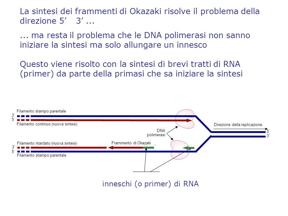 La sintesi dei frammenti di Okazaki risolve il problema della direzione 5' 3' ...
