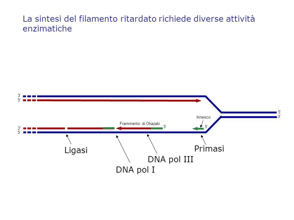 La sintesi del filamento ritardato richiede diverse attività enzimatiche