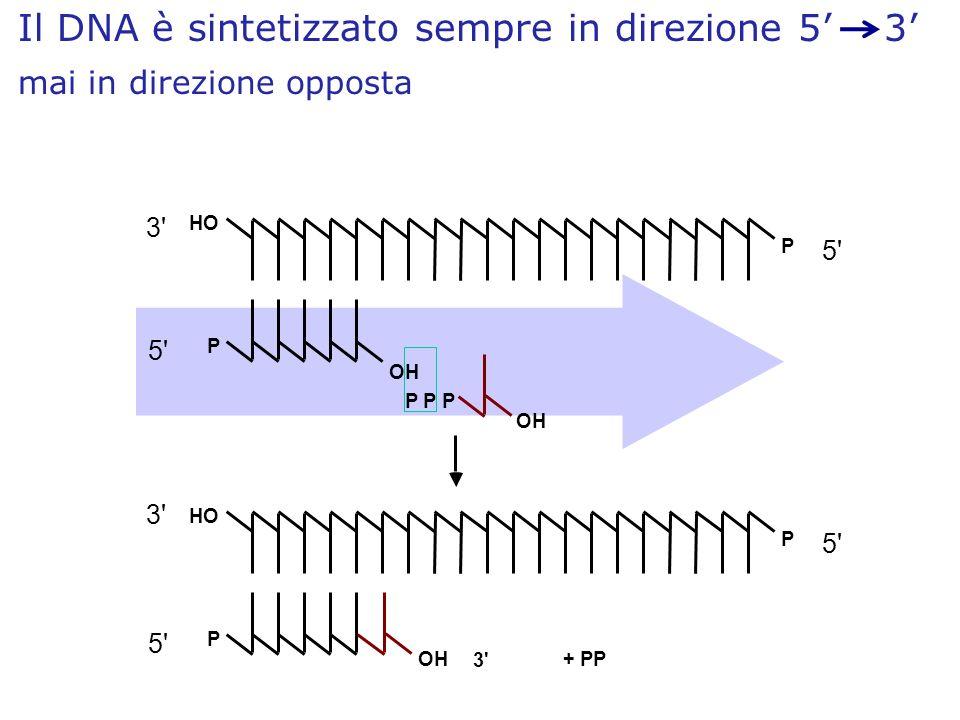 Il DNA è sintetizzato sempre in direzione 5' 3'