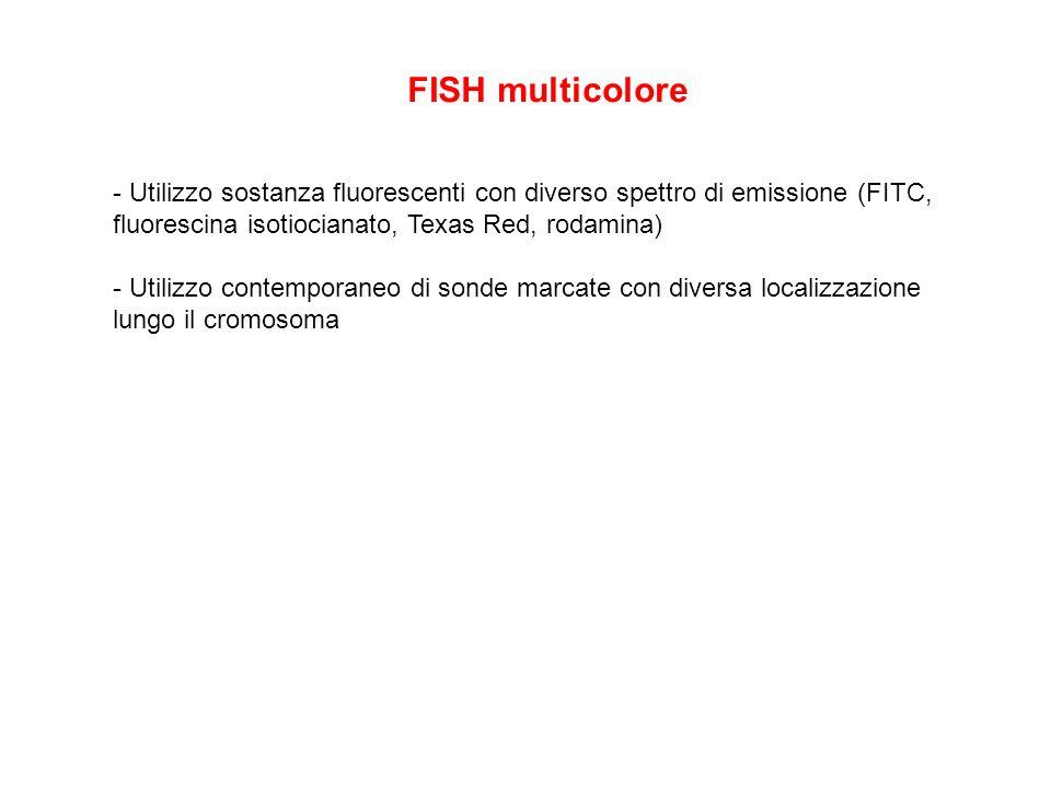 FISH multicolore- Utilizzo sostanza fluorescenti con diverso spettro di emissione (FITC, fluorescina isotiocianato, Texas Red, rodamina)