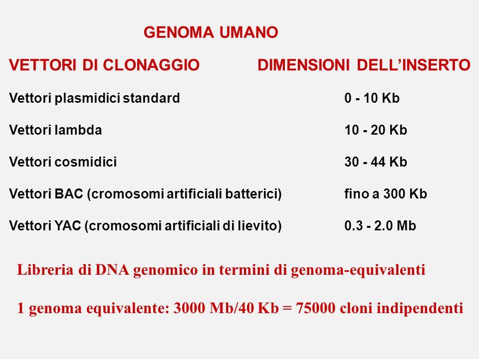 VETTORI DI CLONAGGIO DIMENSIONI DELL'INSERTO