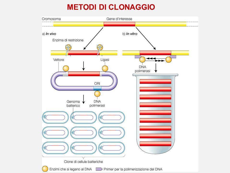 METODI DI CLONAGGIO