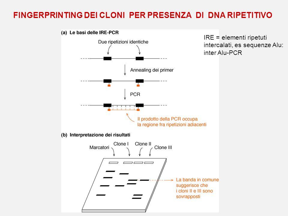 FINGERPRINTING DEI CLONI PER PRESENZA DI DNA RIPETITIVO