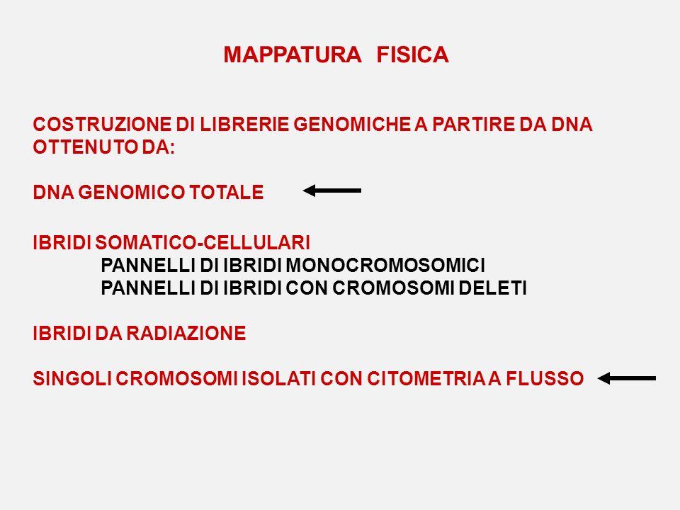 MAPPATURA FISICA COSTRUZIONE DI LIBRERIE GENOMICHE A PARTIRE DA DNA OTTENUTO DA: DNA GENOMICO TOTALE.