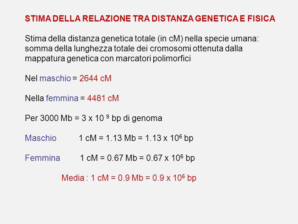 STIMA DELLA RELAZIONE TRA DISTANZA GENETICA E FISICA