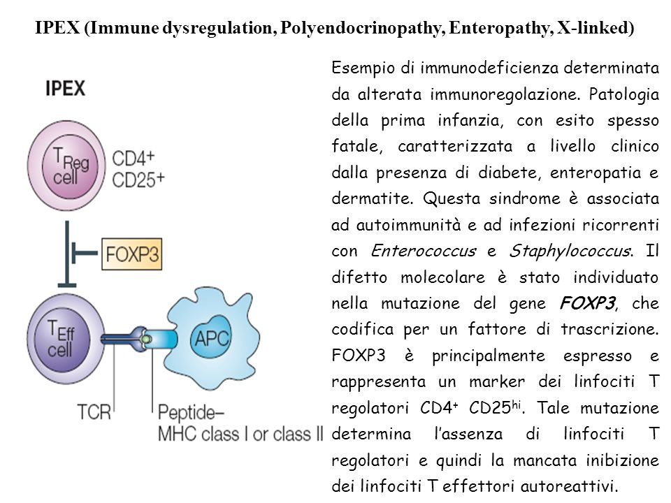 IPEX (Immune dysregulation, Polyendocrinopathy, Enteropathy, X-linked)
