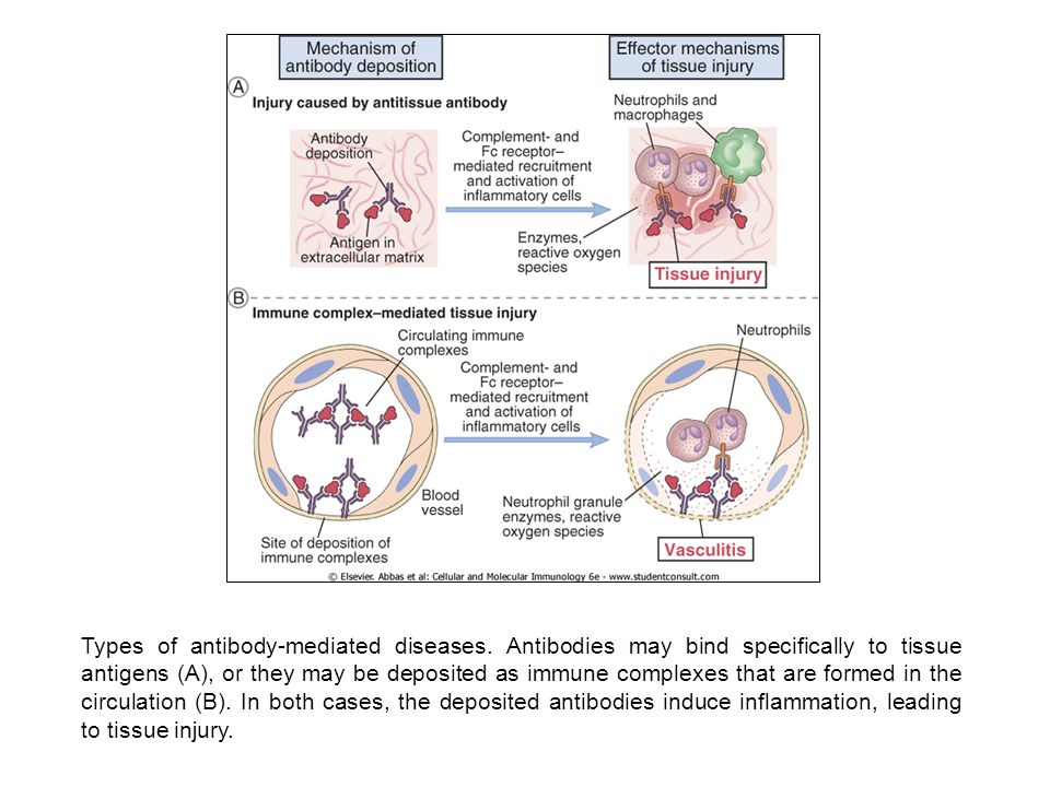 Types of antibody-mediated diseases