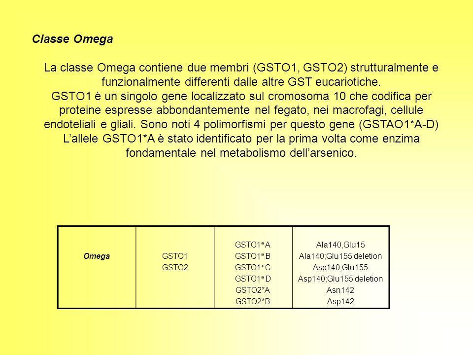 Classe Omega La classe Omega contiene due membri (GSTO1, GSTO2) strutturalmente e funzionalmente differenti dalle altre GST eucariotiche.