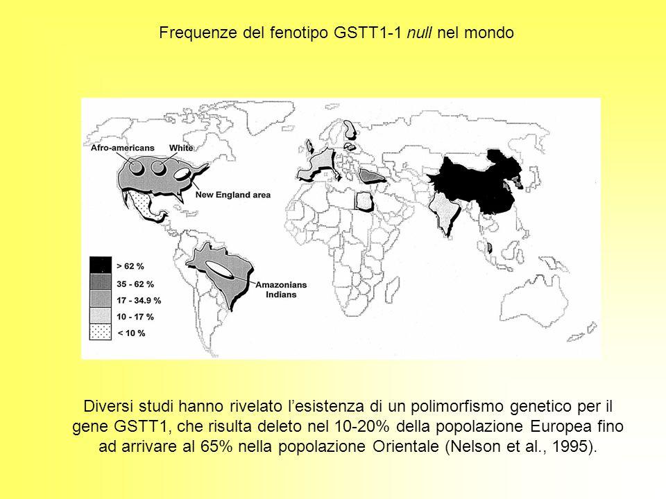Frequenze del fenotipo GSTT1-1 null nel mondo