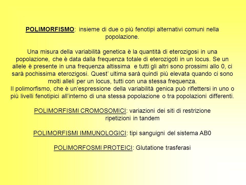 POLIMORFISMI CROMOSOMICI: variazioni dei siti di restrizione
