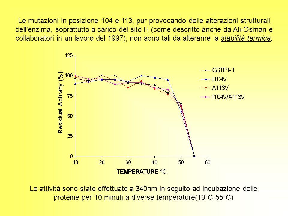 Le mutazioni in posizione 104 e 113, pur provocando delle alterazioni strutturali dell'enzima, soprattutto a carico del sito H (come descritto anche da Ali-Osman e collaboratori in un lavoro del 1997), non sono tali da alterarne la stabilità termica.