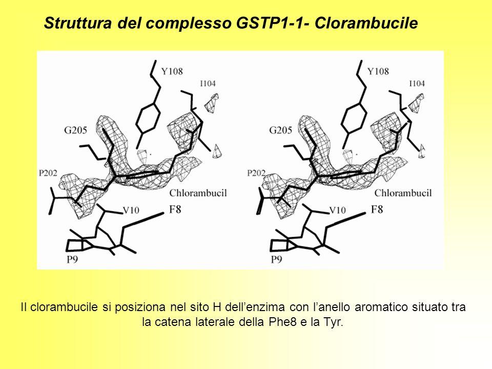 Struttura del complesso GSTP1-1- Clorambucile
