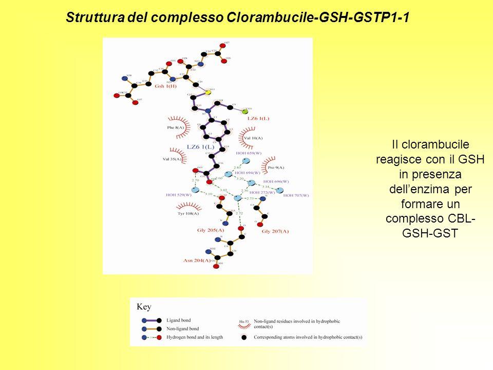 Struttura del complesso Clorambucile-GSH-GSTP1-1