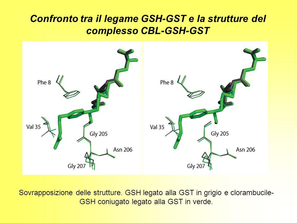 Confronto tra il legame GSH-GST e la strutture del complesso CBL-GSH-GST