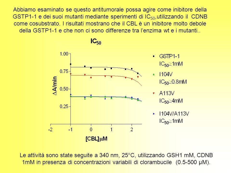 Abbiamo esaminato se questo antitumorale possa agire come inibitore della GSTP1-1 e dei suoi mutanti mediante sperimenti di IC50,utilizzando il CDNB come cosubstrato. I risultati mostrano che il CBL è un inibitore molto debole della GSTP1-1 e che non ci sono differenze tra l'enzima wt e i mutanti..