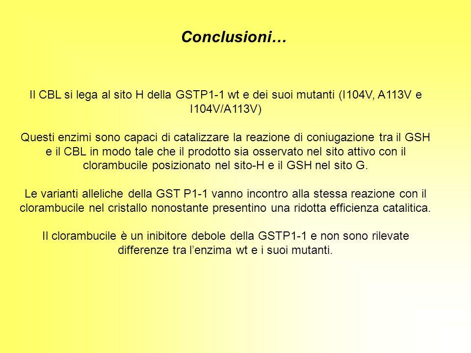 Conclusioni… Il CBL si lega al sito H della GSTP1-1 wt e dei suoi mutanti (I104V, A113V e I104V/A113V)