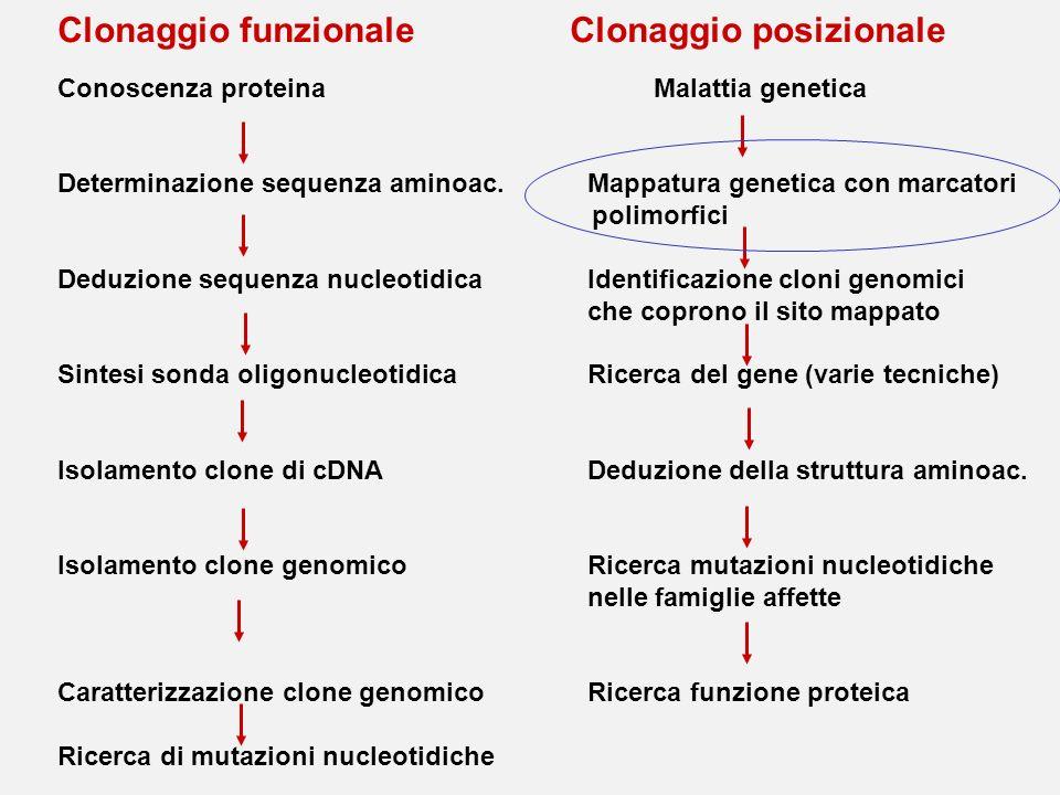 Clonaggio funzionale Clonaggio posizionale