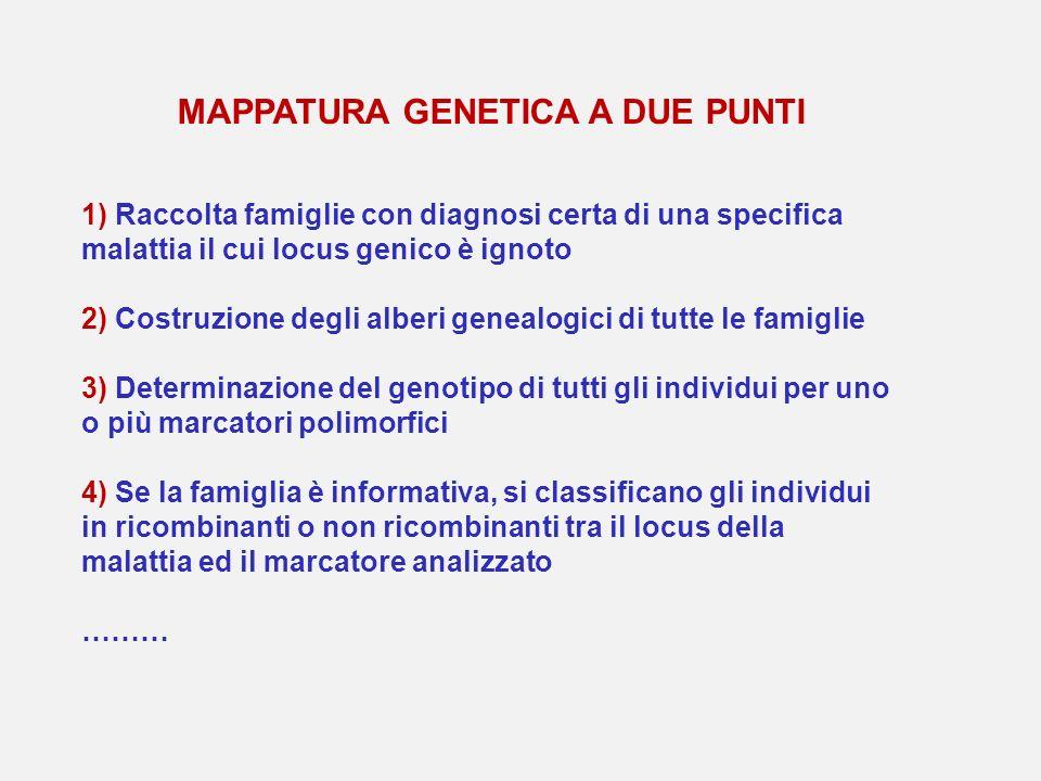 MAPPATURA GENETICA A DUE PUNTI