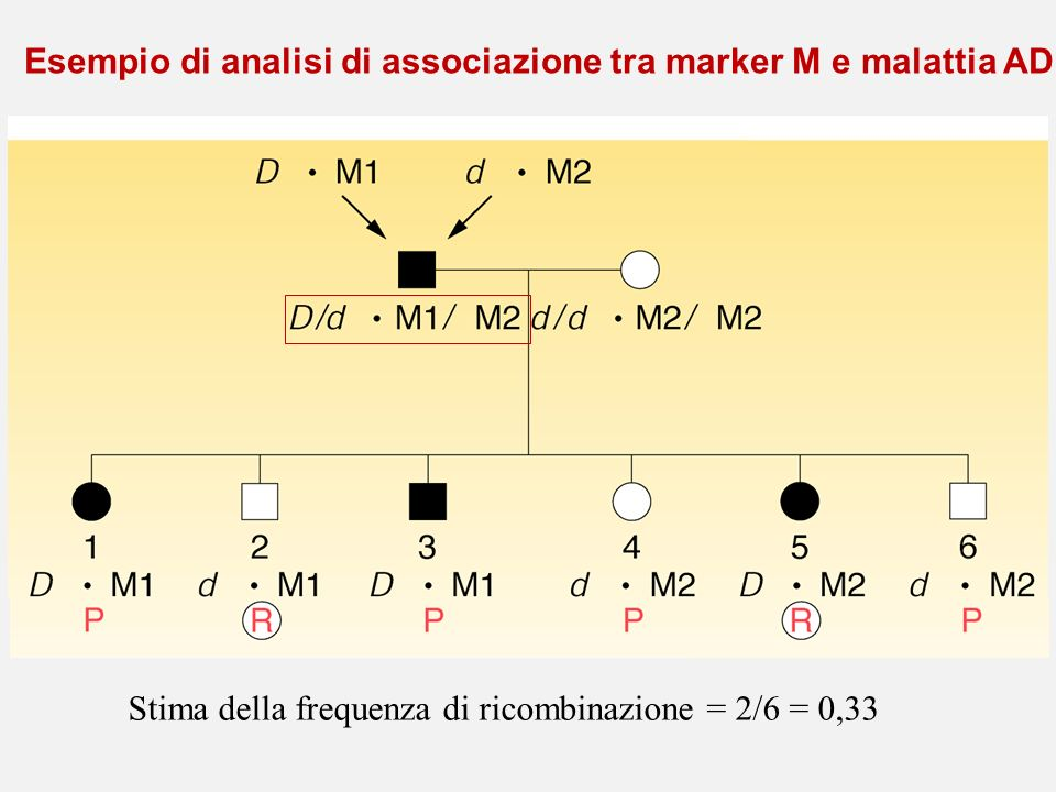 Esempio di analisi di associazione tra marker M e malattia AD