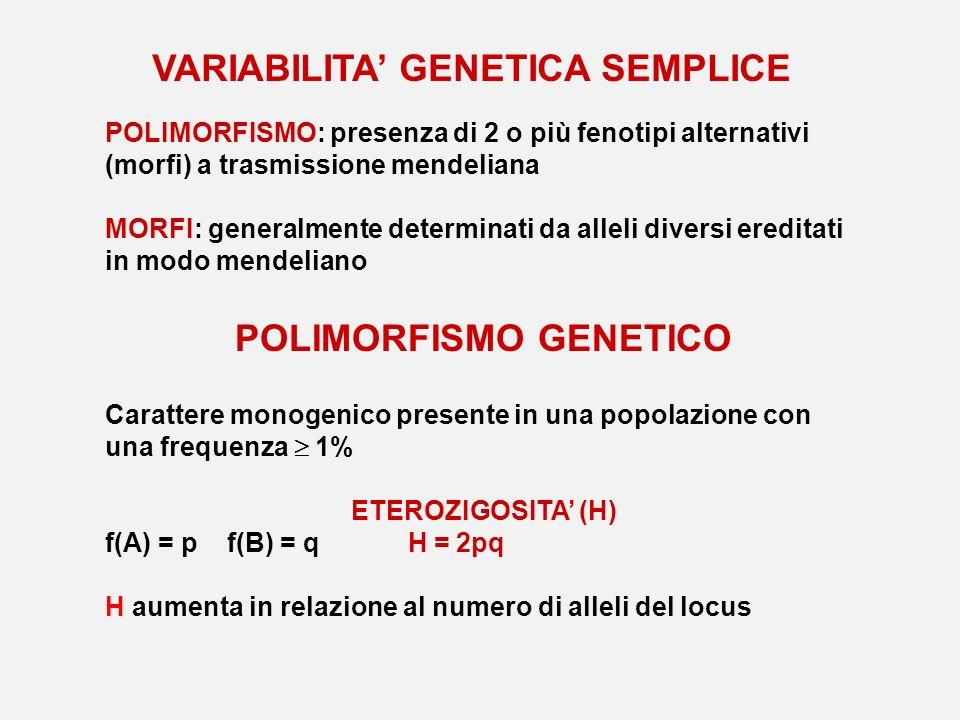 POLIMORFISMO GENETICO