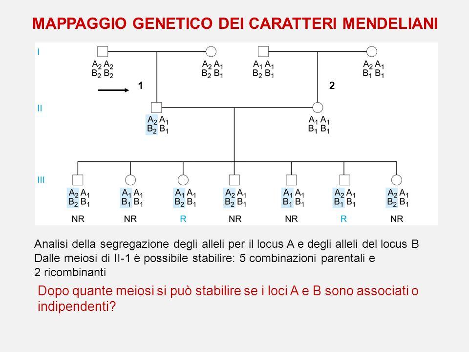 MAPPAGGIO GENETICO DEI CARATTERI MENDELIANI