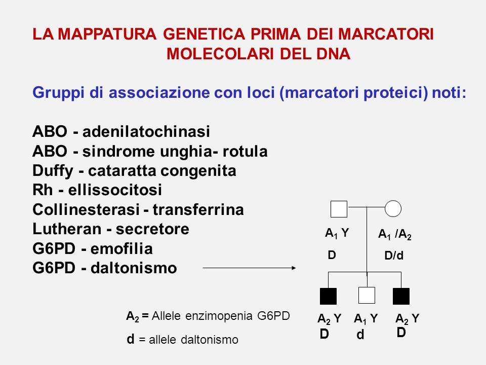 LA MAPPATURA GENETICA PRIMA DEI MARCATORI MOLECOLARI DEL DNA