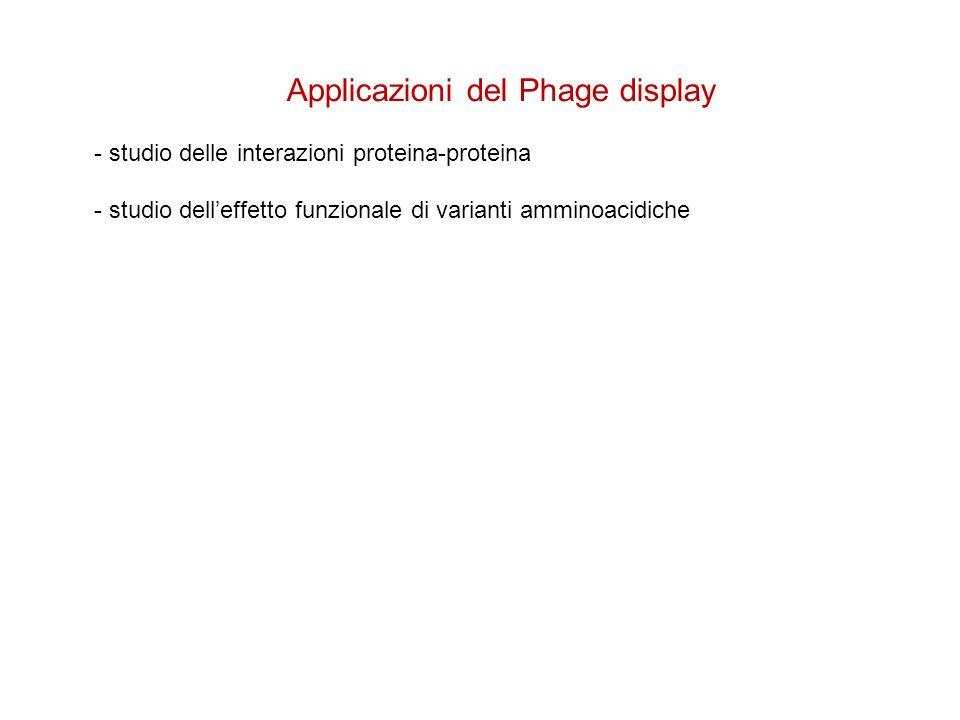 Applicazioni del Phage display