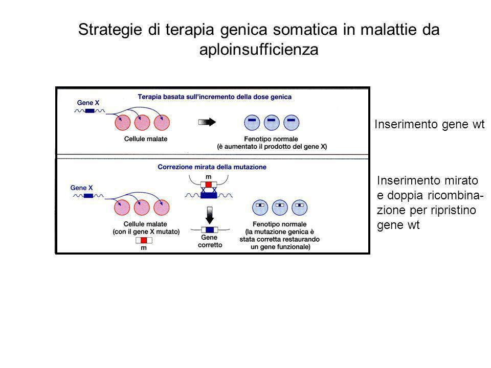 Strategie di terapia genica somatica in malattie da aploinsufficienza